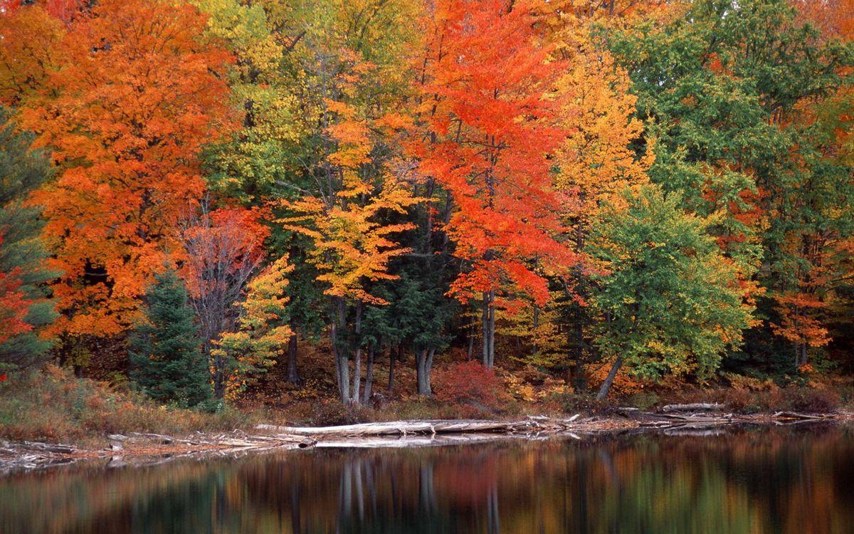 Фото бесплатно природа, оранжевый, красный - на рабочий стол