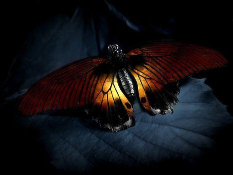 Фото бесплатно бабочка, крылья, листок