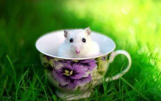 Обои белая, мышка, чашка, трава, граза, ушки, усы, макро, грызуны, животные