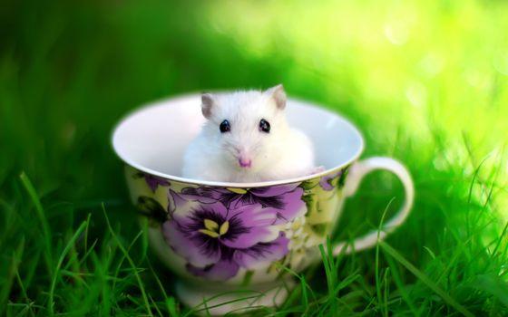 Фото бесплатно белая, мышка, чашка