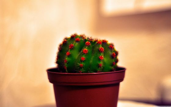Бесплатные фото кактус,иголки,горшок,подоконник,комната,цветы