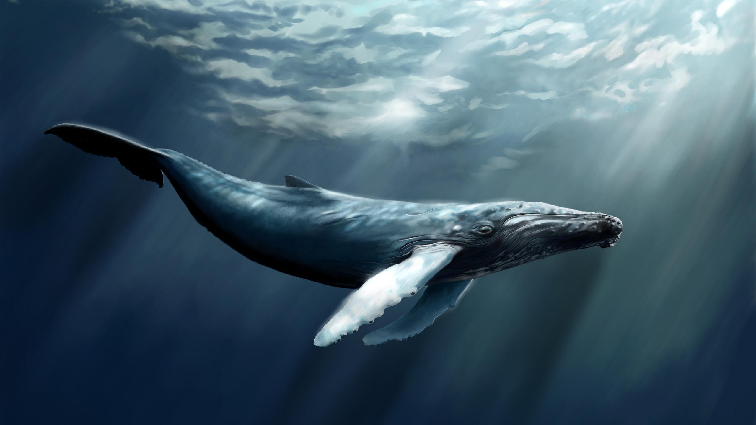 кит, глубина, млекопитающее