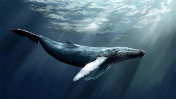 Фото бесплатно кит, глубина, млекопитающее