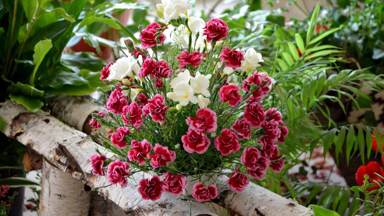 Фото бесплатно клумбы, цветы, разные, лавка, горшок, листья, цветы