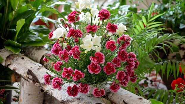 Фото бесплатно клумбы, цветы, разные