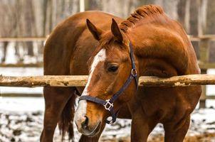Бесплатные фото конь,лошадь,рыжий,животные