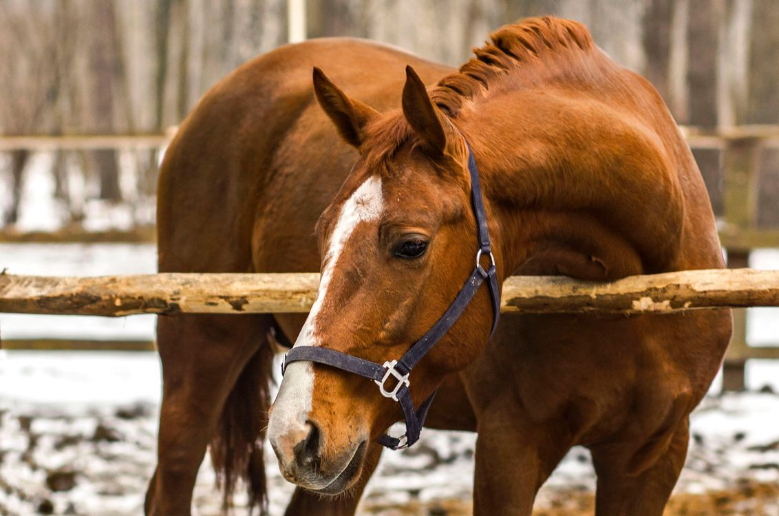 Photos for free horse, red, animals - to the desktop