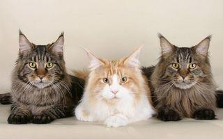 Заставки кошки, морды, глаза