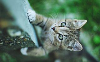 Фото бесплатно кот, котенок, маленький, ползет, бордюр, окрас, шерсть, нос, уши, усы, кошки