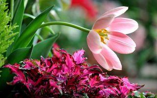Бесплатные фото лепестки,трава,зелень,стебель,листья,лето,цветы