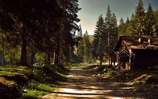 Фото бесплатно лесная, дорога, старый, дом, деревья, елки, лес, лучи, солнца, природа