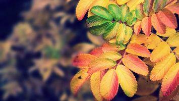 Фото бесплатно листва, осень, желтый, зеленый, красный, ветка, природа