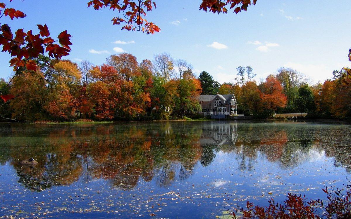Фото бесплатно небо, облака, деревья, лес, елки, березы, листья, ветки, вода, река, природа, природа