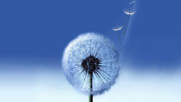 Фото бесплатно одуванчик, белый, семена