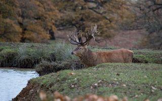 Бесплатные фото олень,рога,шерсть,морда,река,трава,животные