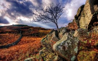 Фото бесплатно осень, камни, мох