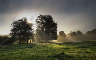 Бесплатные фото поле,трава,зеленая,деревья,лучи,тучи,природа