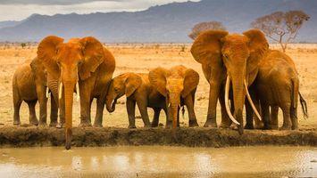 Заставки слоны,африка,песок,ручей,вода,жажда,животные