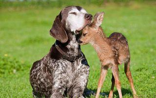 Фото бесплатно собака, оленёнок, друзья
