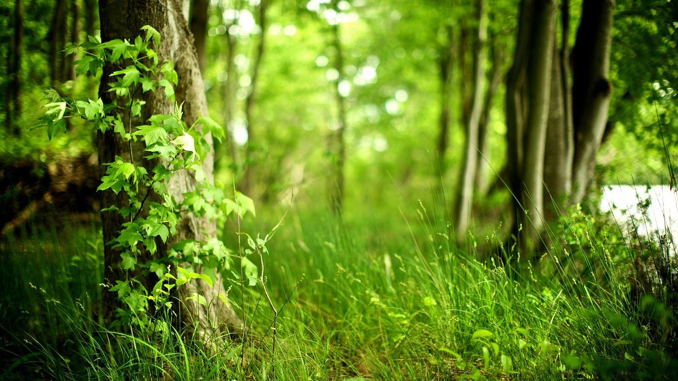 Фото бесплатно трава, кусты, зелень, деревья, лес, лето, тепло, природа, природа