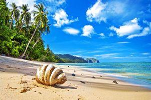 Фото бесплатно тропики, море, пляж, ракушка, природа