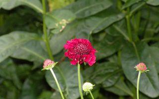 Бесплатные фото цветок,листья,стебель,зелень,клумба,красный,лепестки