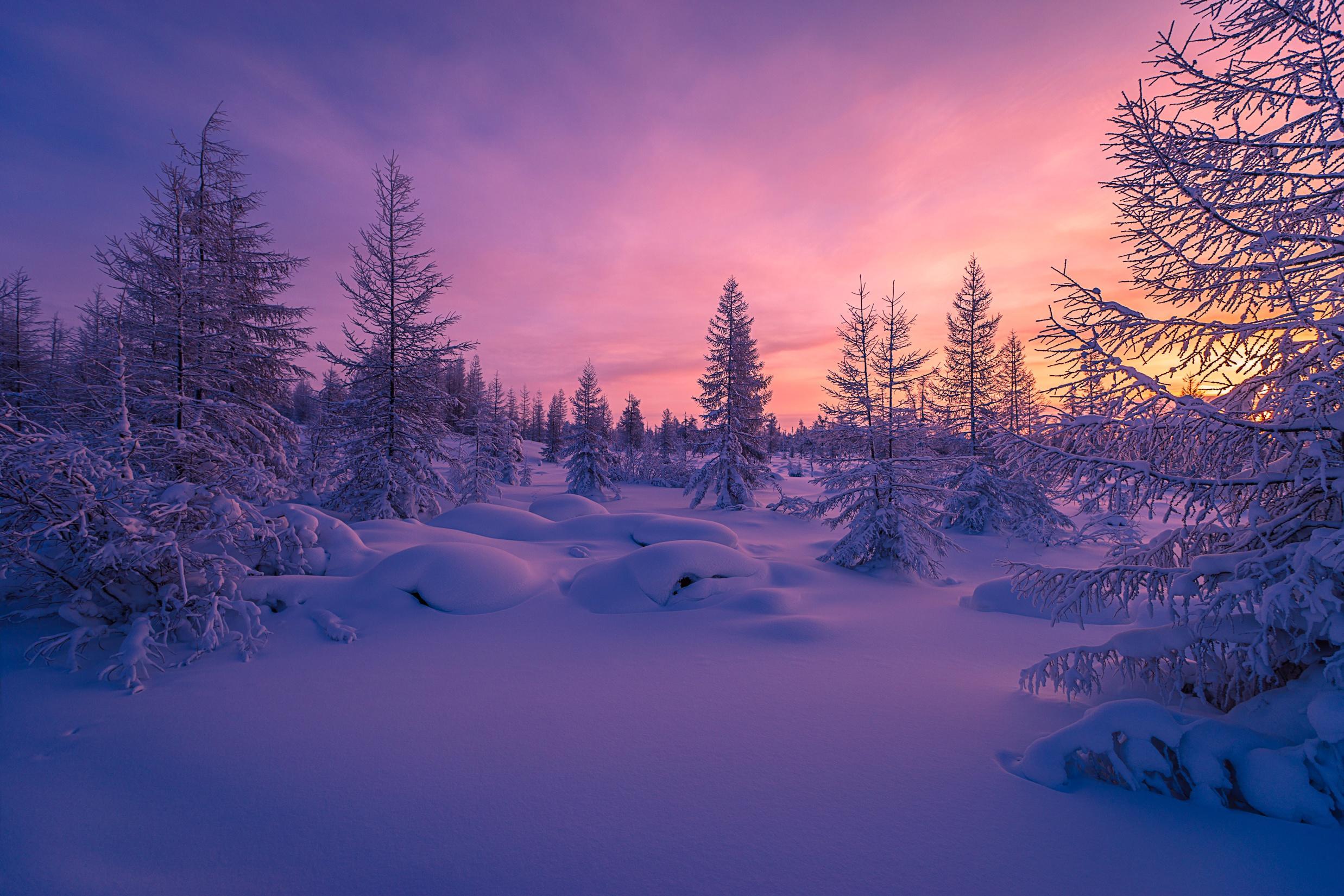 обои закат, зима, снег, деревья картинки фото
