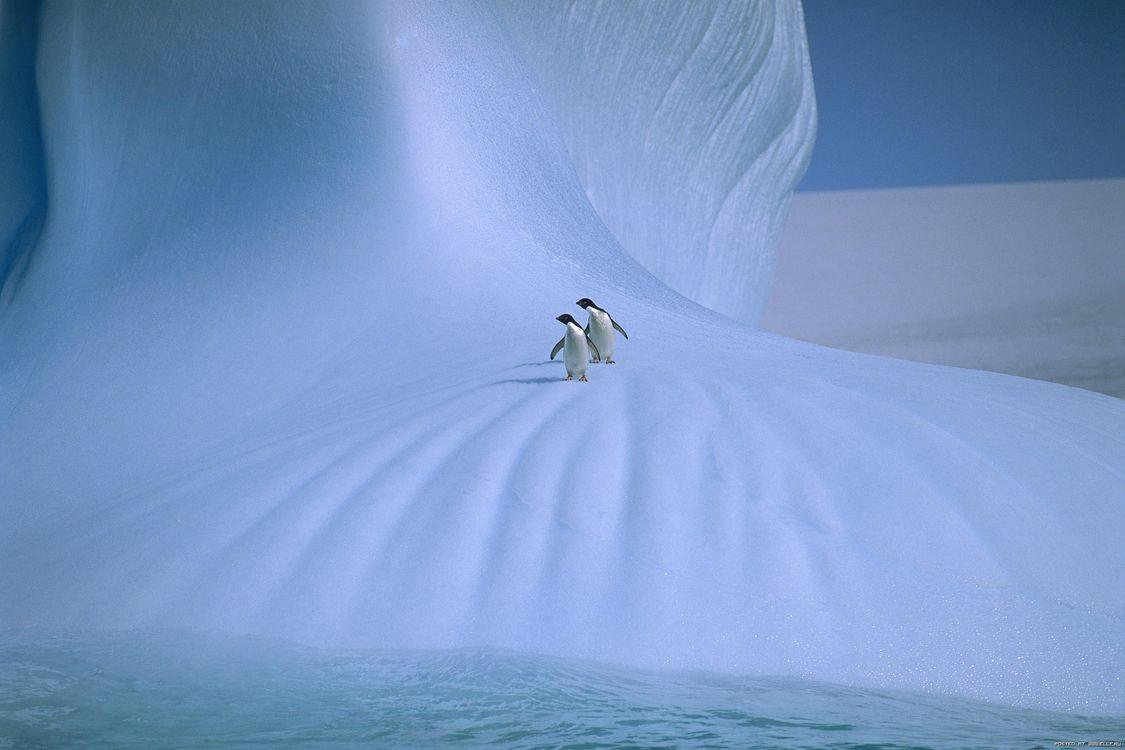 Фото бесплатно пінгвіни, сніг, лід - на рабочий стол