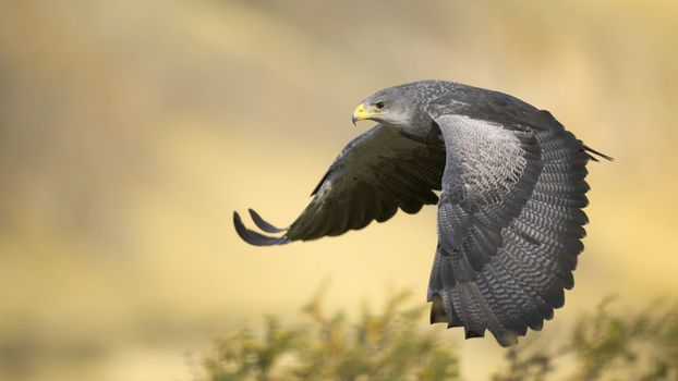 Фото бесплатно ястреб, летит, крылья