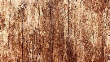 Бесплатные фото дерево,старость,рельеф,свет,ствол,трещины,текстуры