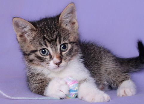 Бесплатные фото котёнок,клубок,малыш,взгляд,животные
