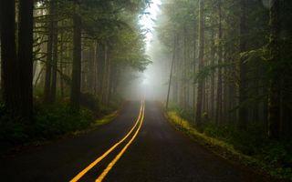 Фото бесплатно дорога, деревья, пейзаж
