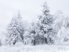 Бесплатные фото лес, деревья, елка, трава, мороз, снег, небо