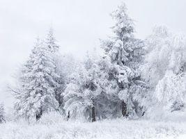 Бесплатные фото лес,деревья,елка,трава,мороз,снег,небо