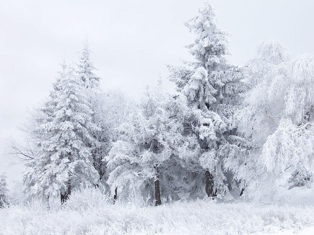 Фото бесплатно лес, деревья, елка, трава, мороз, снег, небо, голубое, зима, иней, пейзажи, природа, природа