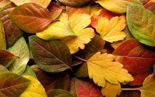 Фото бесплатно осень, деревья, желтые