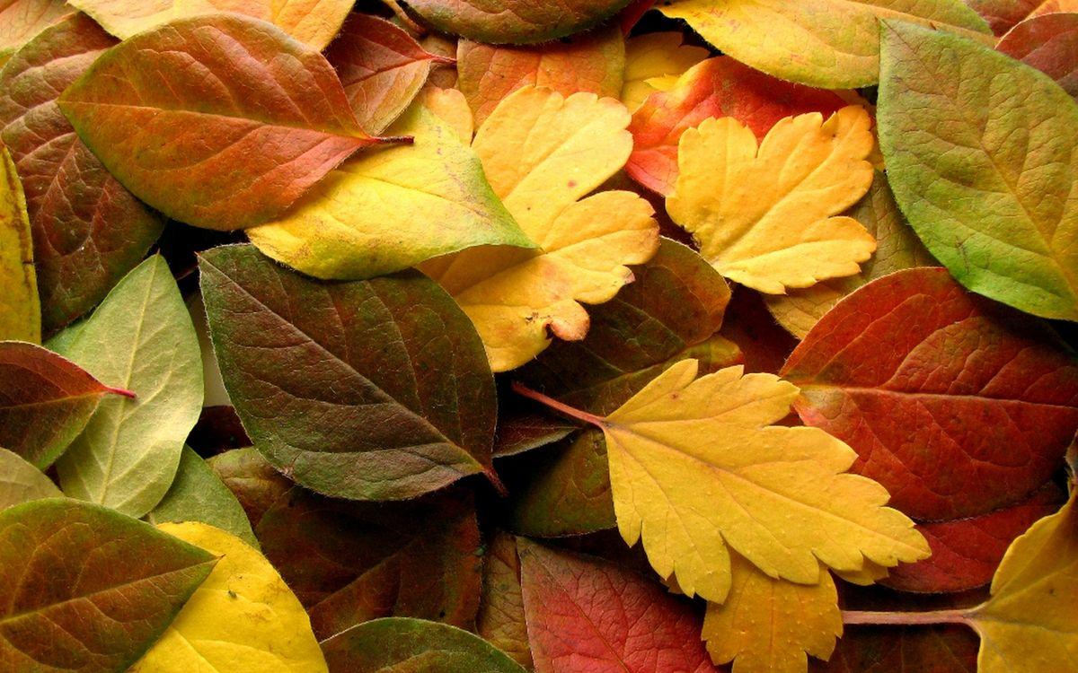 Фото бесплатно листья, листопад, желтые - на рабочий стол