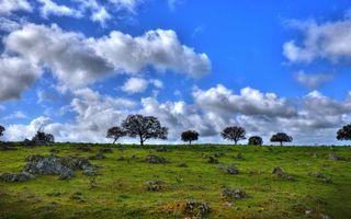 Заставки небо, облака, горизонт, деревья, крона, трава, поле