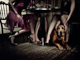 Бесплатные фото пес,щенок,домашний,ручной,ноги,стол,вино