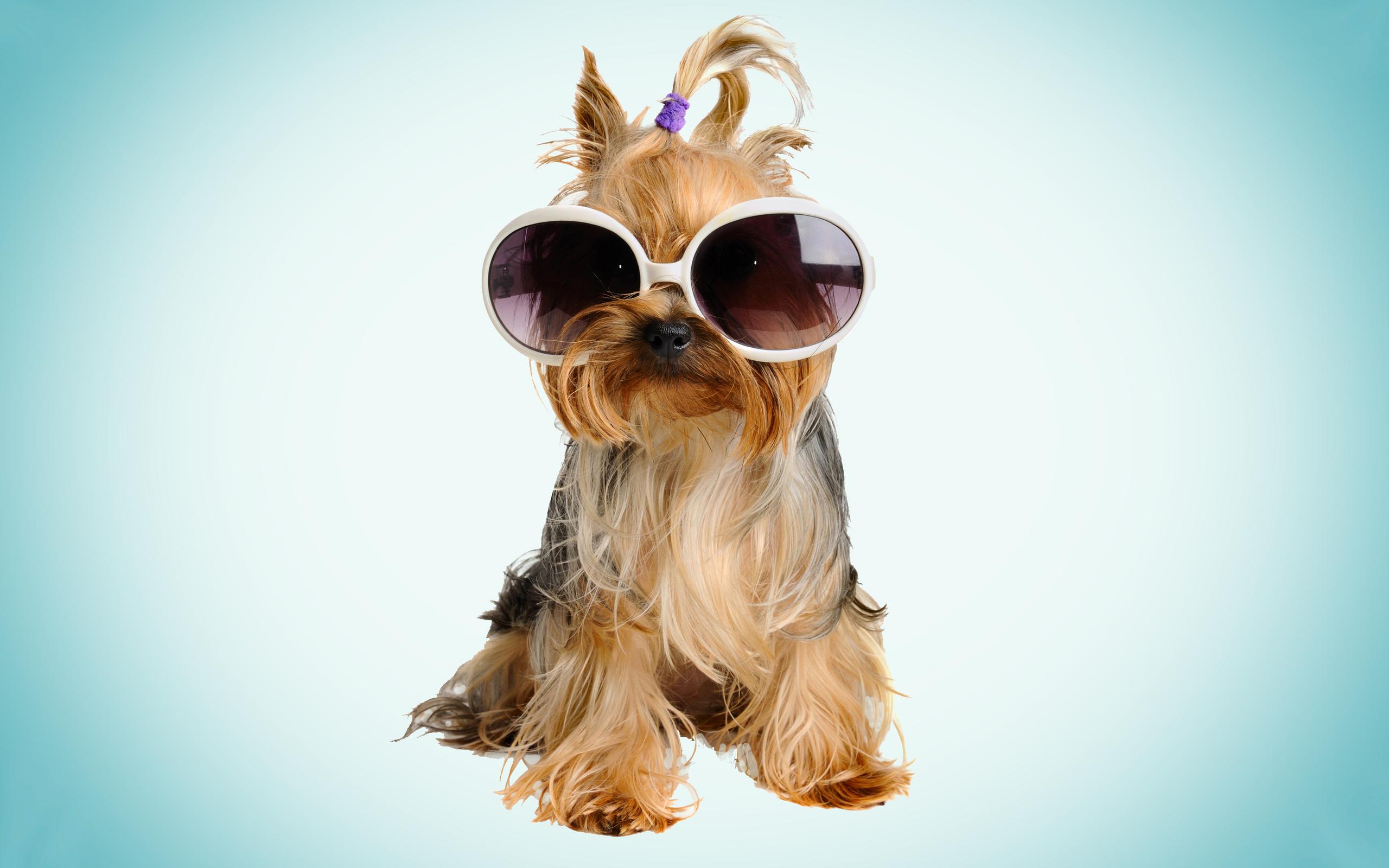 пес, щенок, очки