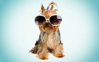 Фото бесплатно пес, щенок, очки