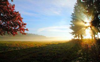 Фото бесплатно поле, деревья, солнце
