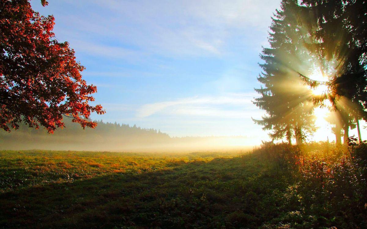 Фото бесплатно поле, деревья, солнце - на рабочий стол
