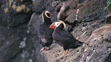 Бесплатные фото птица,черная,перья,крылья,лапы,клюв,глаза