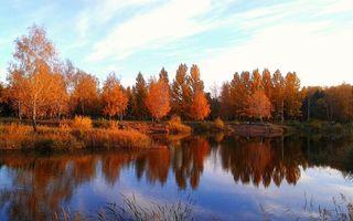 Бесплатные фото роща,березы,листья,крона,осень,листопад,река