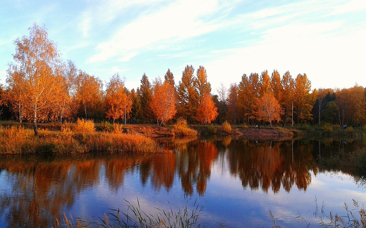 Photos for free forest, birches, leaves - to the desktop