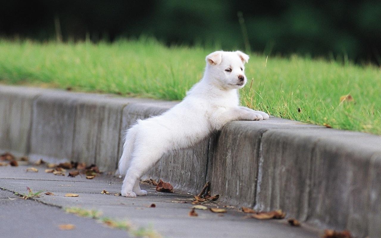 собака, животное, улица