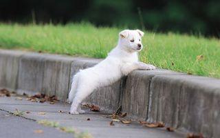 Бесплатные фото собака,животное,улица,осень,бардюр,листья,животные
