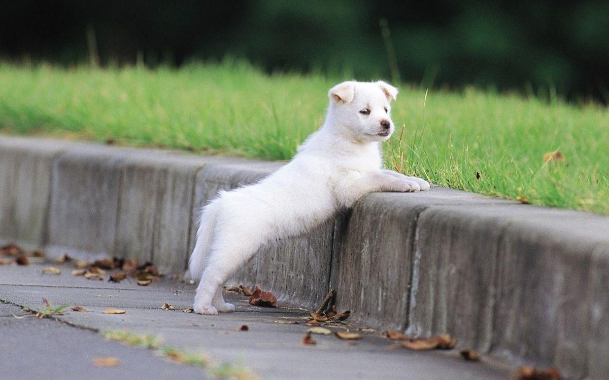 Обои собака, животное, улица картинки на телефон