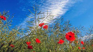 Бесплатные фото цветы,трава,небо,природа